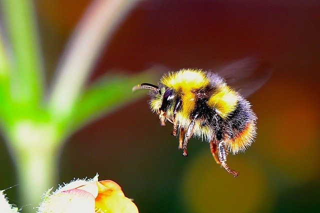 cute flying bumble bee