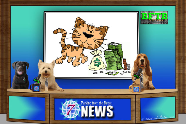 BFTB NETWoof Dog News anchor desk