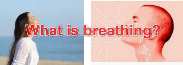 What is breathing? What is the respiratory system?