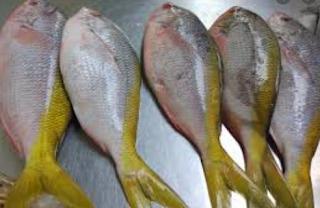 gambar ikan ekor kuning