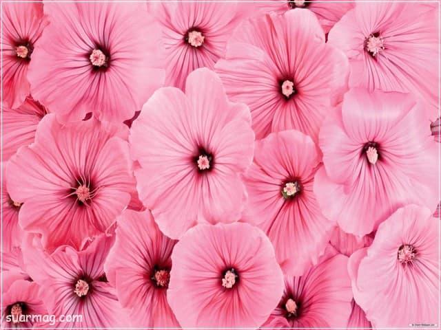صور خلفيات - خلفيات ورد 15   Wallpapers - Flowers backgrounds 15