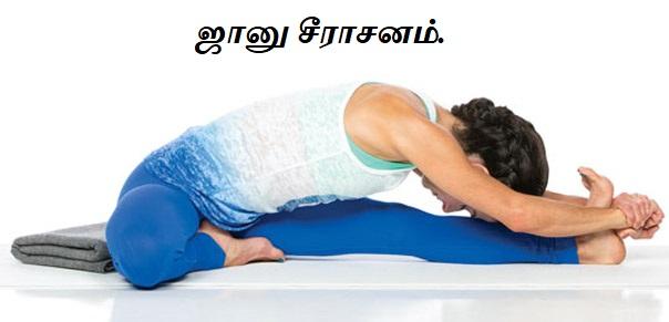 ஜானு சீராசனம் - janu sirsasana - yoga.