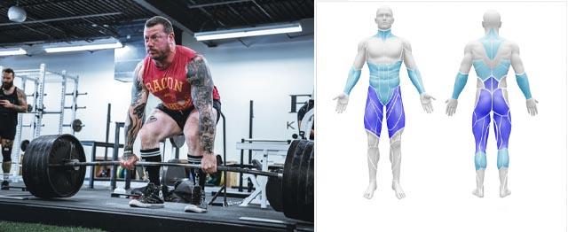 العضلات المستهدفة في تمرين الديدلفت