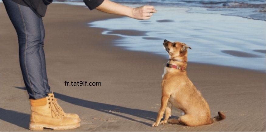 3 tours de chien faciles à apprendre