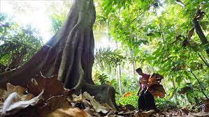 Pengelolaan Hutan Lindung dengan Partisipasi Masyarakat
