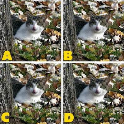 Which image is different? image 24