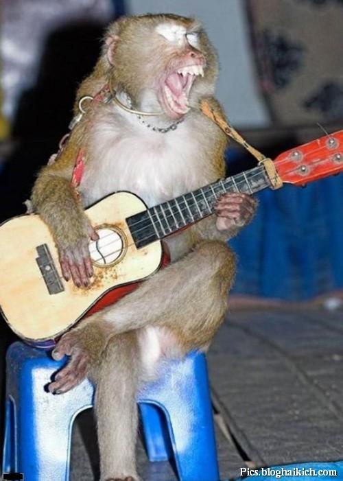 Khỉ chơi guitar