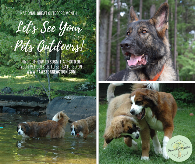 National Great Outdoors Month: Submit a photo of your pet outdoors to be featured