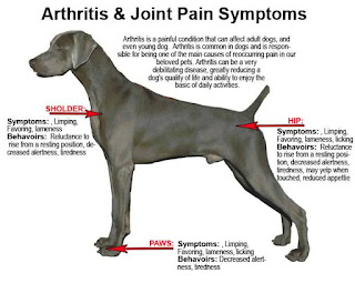 dogs arthritis joint inflammation in canines is pain Unlike human beings also be utilized in pet dogs arthritis relief for dogs
