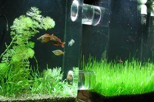 Aquascape Diynew Lighting System For Freshwater Aquarium