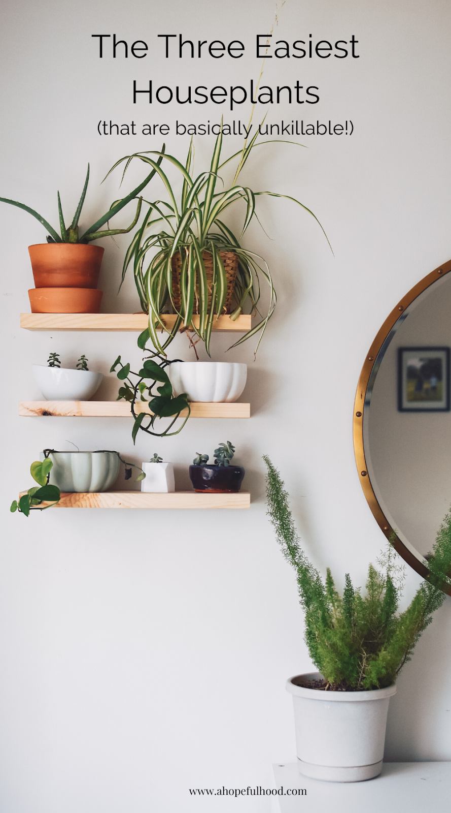 A beginner's guide to getting houseplants. These 3 easy plants are basically unkillable! via @ahopefulhood #indoorgardens #plants #houseplants