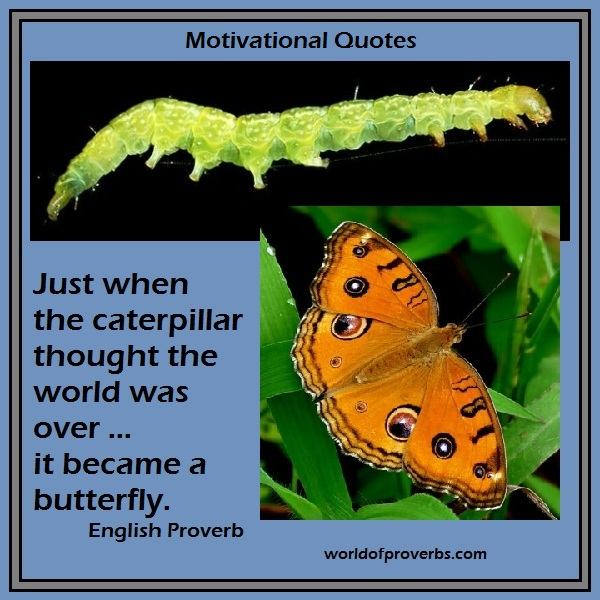 World of Proverbs: Just when the caterpillar thought the
