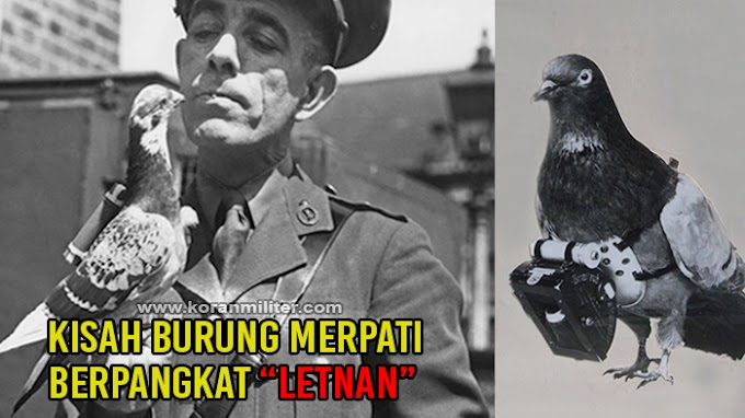 Kisah Burung Merpati Berpangkat Letnan Yang Bikin Belanda Kewalahan