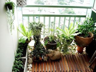 Plantas en balcones