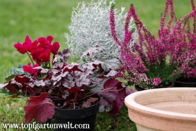 Blumenschale herbstlich bepflanzen - Gartenblog Topfgartenwelt