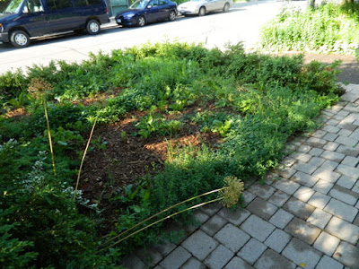 Toronto Wychwood Pollinator Garden Installation Before by Paul Jung Gardening Services--a Toronto Gardening Company