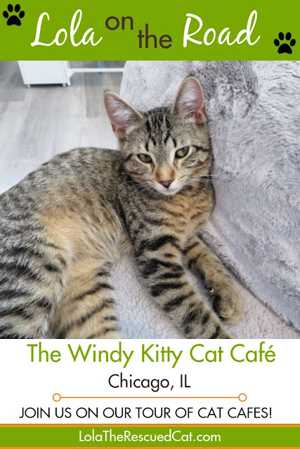 The Windy Kitty|cat cafes