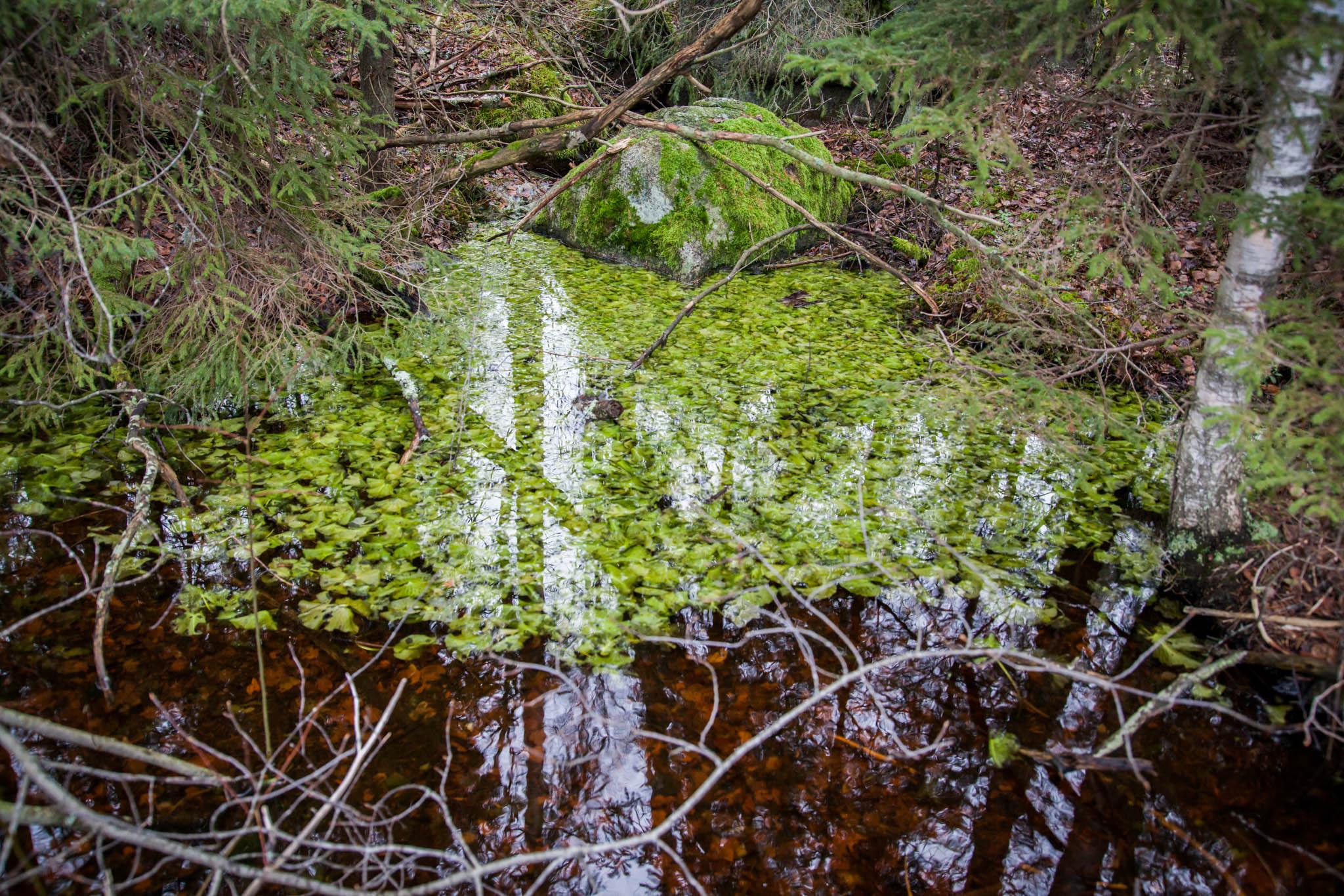 vettä risuja retkeily nokia