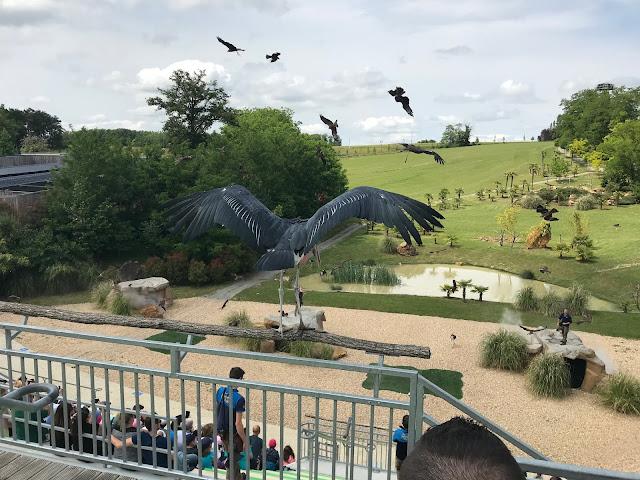 Zoo de beauval spectacle des oiseaux