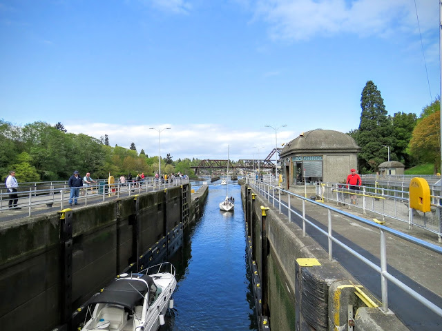 How to Spend a Perfect Sunday in Seattle - Hiram M Chittenden Locks