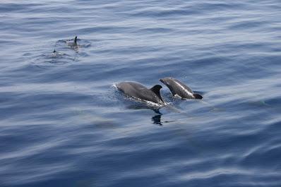 Wasserverbesserung und Delfine in Italiens Häfen