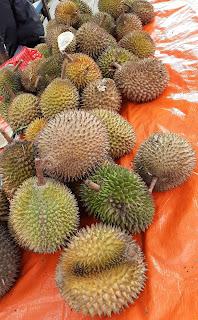 Durian dari hutan pegunungan meratus kalimantan selatan