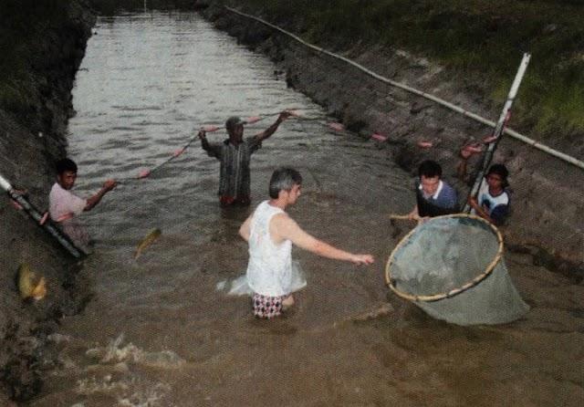Sukses Meraup Miliaran Rupiah Dari Pembiakan Ikan Arwana Super