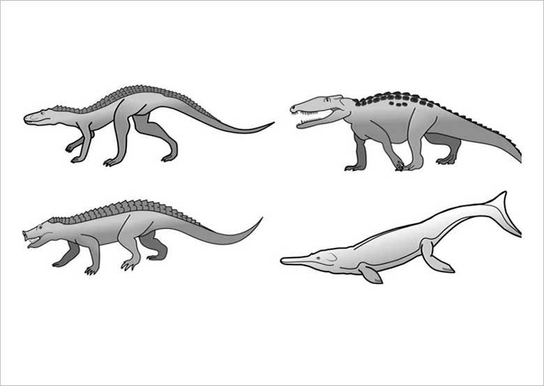 Crocodilo Evolução