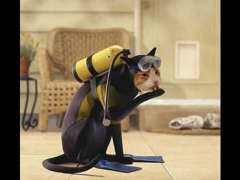 Apabila kucing dan anjing dipedajal dengan costumeinilah