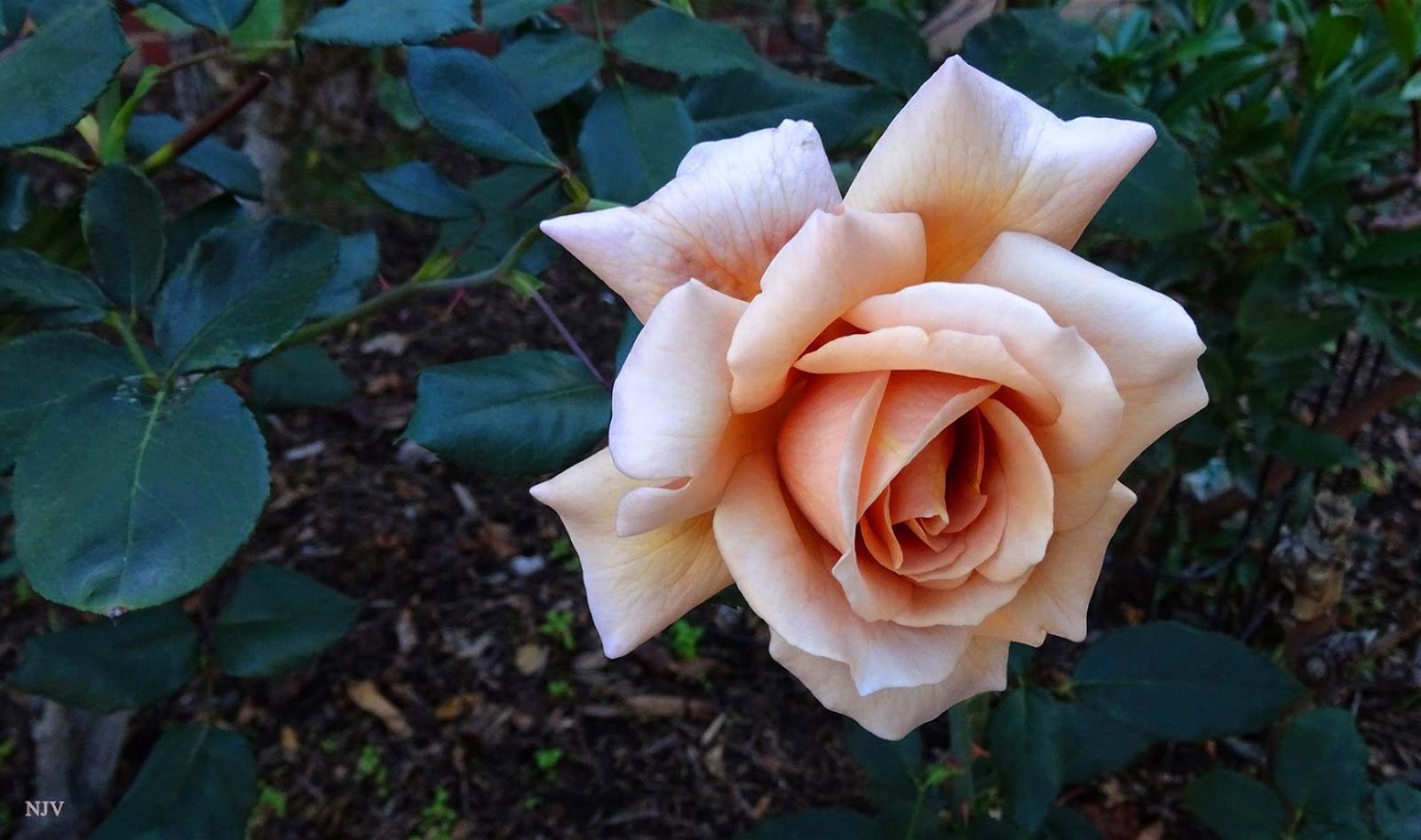 Floral Friday Fotos November 2019