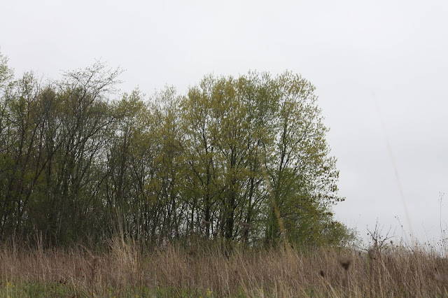 The prairie blends into the forest at the Spring Lake Forest Preserve in Barrington, Illinois