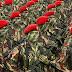 Tempat Bimbingan Belajar TNI dan Polri Bali Terpercaya