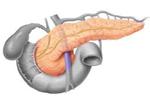 Páncreas, secretor de jugo pancreático