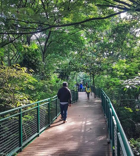 forest-walk-bandung