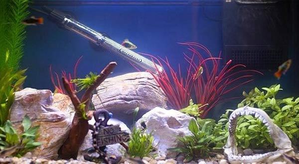 Rekomendasi Merk Heater Aquarium Terbaik