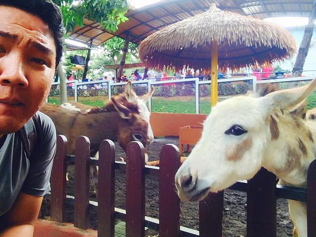 baby zoo batu secret zoo