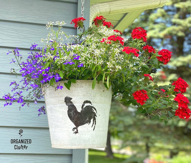 How And Why To Plant Verbenas #annuals #containergarden #deadheading #fertilizer