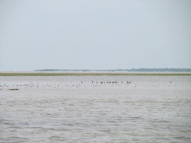 delta dunarii multe pasari