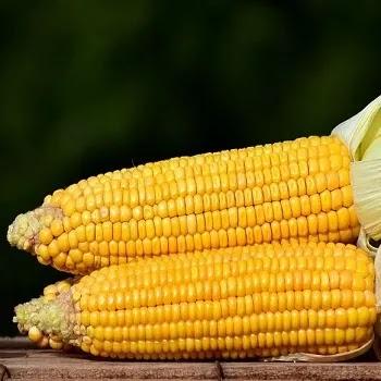 मका, corn vegetables name in Marathi