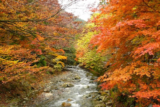 Hiking in Japan | Mt. Bunagatake in Shiga | Fall Foliage In Japan