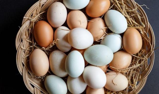 Penjelasan Tentang Perbedaan Warna Telur