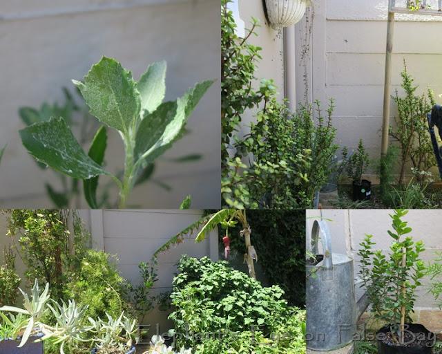 New plants for the Ungardener
