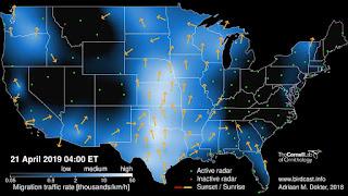 http://birdcast.info/live-migration-maps/