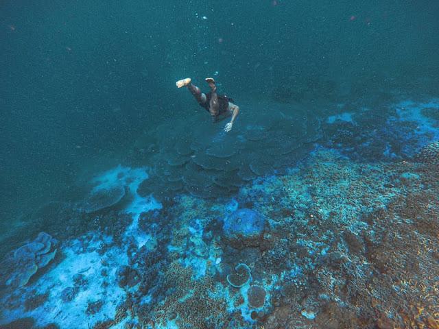 Spearfising Untuk  Melatih Pikiran Dan Ketenangan Di Dalam Laut