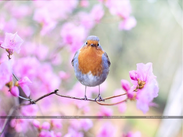 Bird Images | Bird Wallpaper HD Free Download