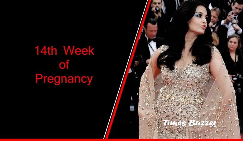 14th week of pregnancy