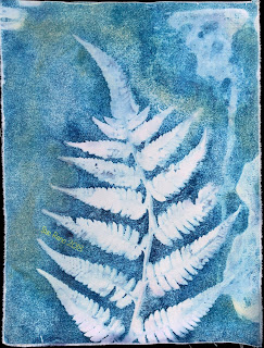 Wet cyanotype -Sue Reno_Image 515