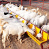 Goat Farming Workers Needed In Canada - APPLY NOW