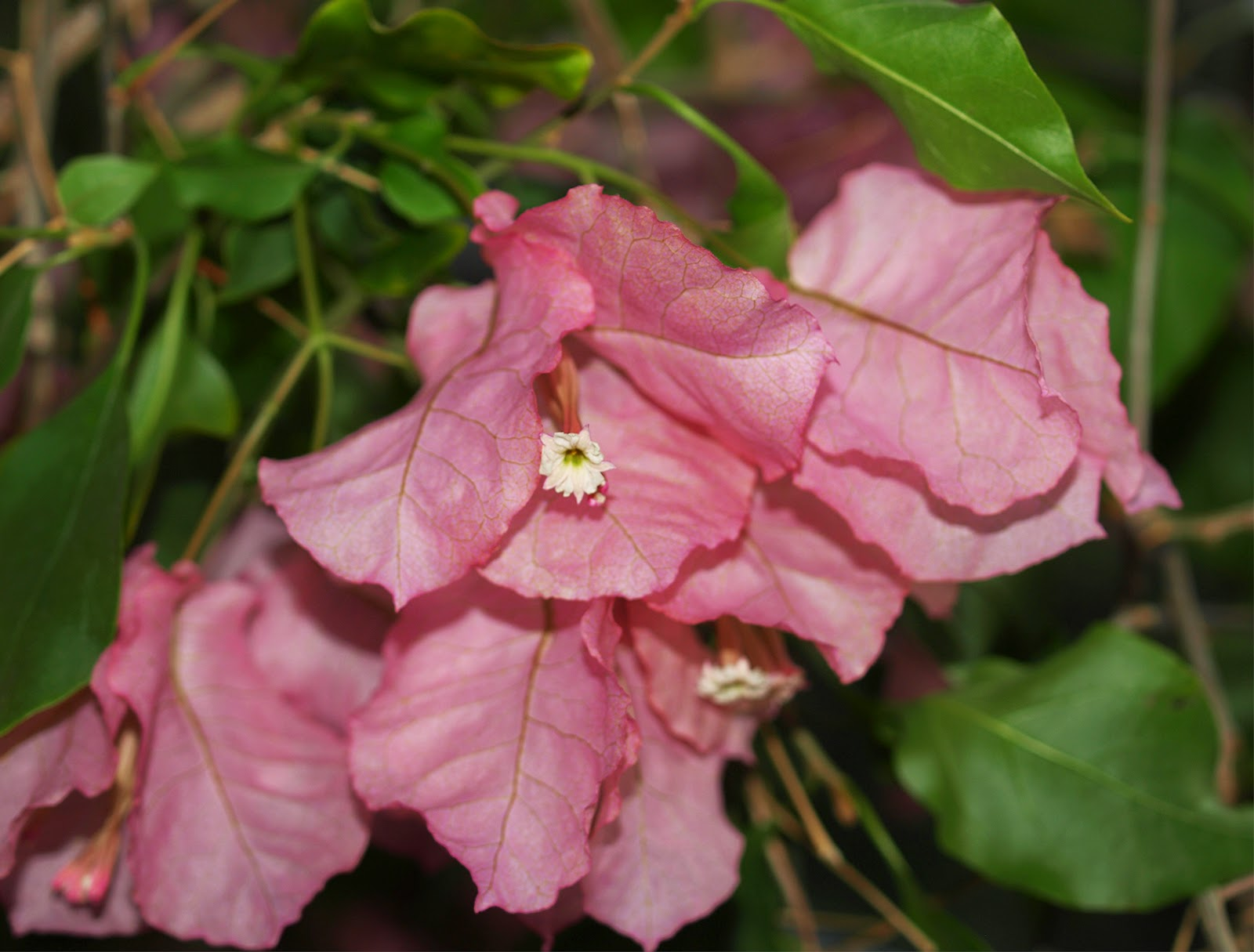 giftige planter i haven