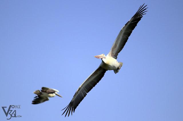 Birds of Ranganathittu